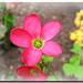 Lucky flower / Flor afortunada - by . SantiMB .