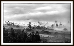 Misty morning (Quiteo) Tags: blancoynegro perfect photographer artistic expression soe the blueribbonwinner artisticexpression supershot abigfave platinumphoto anawesomeshot superbmasterpiece diamondclassphotographer flickrdiamond artlegacy bnganadormes bn052008