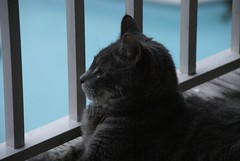 Sphinx Jinx (Kate217) Tags: cat jinx