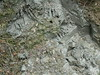 Bear claw marks, trail to Anan Bay, Alaska (brewbooks) Tags: alaska animalia mammalia ursus brownbear ursusarctos grizzlybear ursidae carnivora chordata ananbay vertebrata osopardo oursbrun taxonomy:kingdom=animalia taxonomy:class=mammalia taxonomy:phylum=chordata taxonomy:subphylum=vertebrata taxonomy:common=grizzlybear taxonomy:binomial=ursusarctos taxonomy:order=carnivora taxonomy:genus=ursus taxonomy:species=arctos taxonomy:family=ursidae taxonomy:common=brownbear taxonomy:common=osopardo taxonomy:common=oursbrun inaturalist:observation=851009