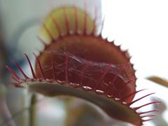 flytrap 2