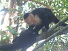 Monkeys at Manuel Antonio National Park