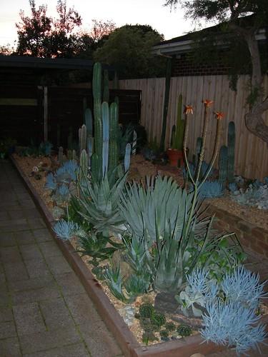 My C+S garden 4610554041_75290d540c