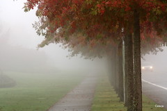Line in the Fog (avilo) Tags: street autumn trees mist color nature grass leaves car fog shots mosaic best sidewalk your theme frontpage   coth supershot thegalaxy topshots mywinners colorphotoaward photosandcalendar natureselegantshots panoramafotografico bestcapturesaoi coth5 sailsevenseas newgoldenseal theoriginalgoldseal elitegalleryaoi mygearandmebronze flickrportal mygearandmeplatinum dblringexcellence tplringexcellence 4thplacewinnerdragondaggerphotowinnersgallery114 frontpagephotoinbobs unclegroup rememberthatmomentlevel4 rememberthatmomentlevel1 rememberthatmomentlevel2 rememberthatmomentlevel3