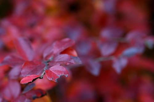 November Red