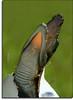 The Born of an Ancient Dinosaur (Jeremy-G) Tags: baby white black green canon born bravo searchthebest angle bokeh birth egg shell crocodile hatch naturesfinest instantfave specnature 400d abigfave anawesomeshot impressedbeauty superaplus aplusphoto superbmasterpiece goldenphotographer bratanesque flickrelite thatsclassy bppslideshow bppslideshowfavorite