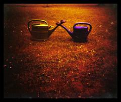 watering pot love #2 ( . ) Tags: green love grass holga lomo xpro cross wateringpot thisisnow utatafeature utata:border=none itsnotokthatasmalltownlikegrazhijacksagroupstagssoijustaddedthisprettylongtagjusttosay