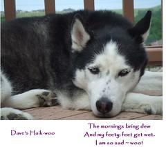 Dave's haik-woo 1