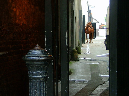 Horse in Alley
