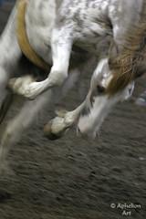 Bareback Horse- long exposure (Aphelion Art) Tags: horse bareback team barrel bull riding rodeo calf saddle stampede bronc racer roping greeley roughstock