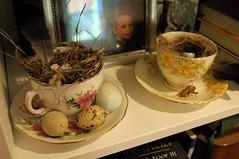nests in tea cups