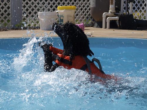 Lola swimming