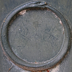 Ouroboros (Uroborus) (Leo Reynolds) Tags: cemetery canon eos snake f45 7d squaredcircle serpent iso320 ouroboros cemeterysymbol uroborus sqparis 53mm hpexif 0011sec groupcemeterysymbolism sqset057 xleol30x xxx2010xxx