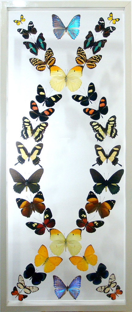 The Symmetry Complex Mounted Butterfly Art for Home Decor