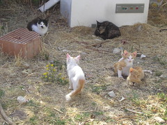 Colonia Felina (silgeo) Tags: cute animals cat felini colonia gatti gattini