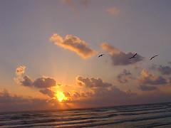 Amanecer en Miramar (León Felipe Guevara Chávez) Tags: sea seagulls beach gulfofmexico méxico sunrise mar scenic playa tamaulipas mx gaviotas miramar myfirstphotoonflickr golfodeméxico ciudadmadero playademiramar