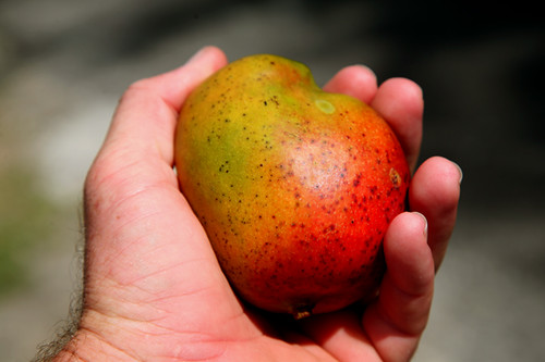 its mango season