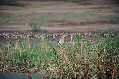 Uganda - QENP Rich Bird Life 10