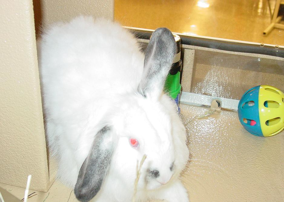 The World's most recently posted photos of bunnies and