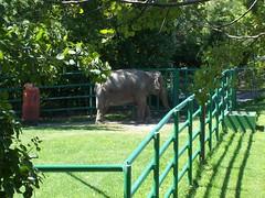 RGZ - Asian Elephant (fkalltheway) Tags: elephant asianelephant rosamondgiffordzoo wildlifetrail fkalltheway
