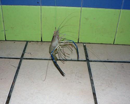 king prawn.JPG