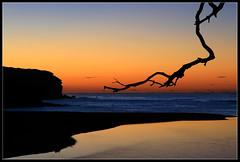 Dawn Touch (down_the_rabbit_hole) Tags: ocean morning light seascape beach water beautiful silhouette landscape dawn bravo branch searchthebest lagoon predawn headland naturesfinest blueribbonwinner supershot magicdonkey flickrsbest mywinners abigfave anawesomeshot colorphotoaward goldenphotographer onlythebestare