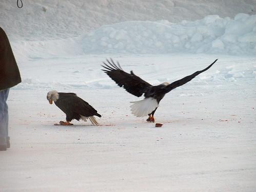 eagle drive thru