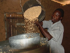 Loading maize into metal silo for storage, Kenya (CIMMYT) Tags: africa man metal store corn technology kenya african grain storage silo demonstration impact farmer agriculture showing maize kenia hombre loading storing grano kenyan africano tecnologa demonstrating eastafrica impacto agricultura sdc frica agricultor mostrando maz demostracin subsaharanafrica almacn cargando productor almacenamiento foodsecurity demostrando cimmyt almacenando almacenaje seguridadalimentaria keniano incomesecurity fricaoriental fricasubsahariana swissagencyfordevelopmentandcooperation effectivegrainstorage almacenamientoefectivodegrano postharvestlosses prdidasposcosecha seguridadeconmica