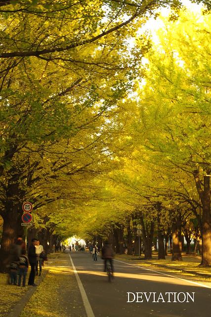 2010'10 Hokkaido Univ-4