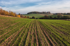 Organic Farming (Dietrich Bojko Photographie) Tags: light d50 germany landscape deutschland licht farming nikond50 organic landschaft brandenburg brodowin organicfarming dietrichbojko globalindex kologischelandwirtschaft