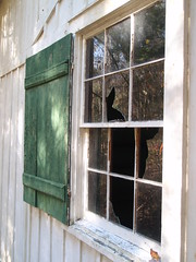 elkmont house window (1)
