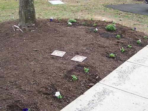Start of a Garden