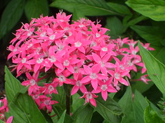 Delightful (Little Spooks) Tags: pink flowers macro green nature leaves garden asheville northcarolina biltmoreestate mywinners