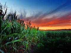 Cornfield sunset (James Jordan) Tags: sunset sky clouds rural wow illinois twilight corn cornfield 100v10f anawesomeshot superhearts