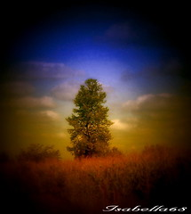 Au milieu de nulle part / In the middle of nowhere (***Isabelle***) Tags: tree nature arbre wowiekazowie thegoldenmermaid