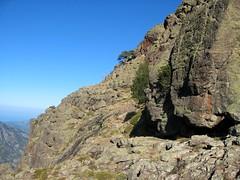 La vire de l'Andatone (Scaffone) versant Campu Razzinu Sud à son extrémité (laricio mort)