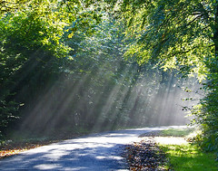 The road lit up by sunbeams (algo) Tags: road trees light green topv111 photography topf50 bravo topv1111 topv999 topv777 rays algo topv3333 topf100 sunbeams 100f naturesfinest chilternforest magicdonkey 50f gtaggroup mywinners colorphotoaward 200750plusfaves diamondclassphotographer theperfectphotographer