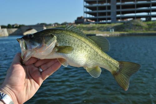 morefishing 017