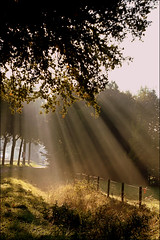 Magic light (Astrid van der Berg) Tags: sunlight fog earlymorning sunrays zevenaar gelderland goldenmagicalmoment