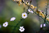 Tiny Flower Bokeh (mjkjr) Tags: atlanta fall canon ga rebel bokeh availablelight atl dslr telephotolens 2010 selectivefocus 135l cowetacounty potn october22 550d newnanga t2i ef135mmf2lusm clubsi mjkjr httpwwwflickrcomphotosmjkjr october222010