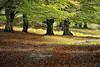 (jonlp) Tags: fall nature forest landscape natura euskalherria basquecountry navarre basoa nafarroa urbasa udazkena autumcolors paisajea