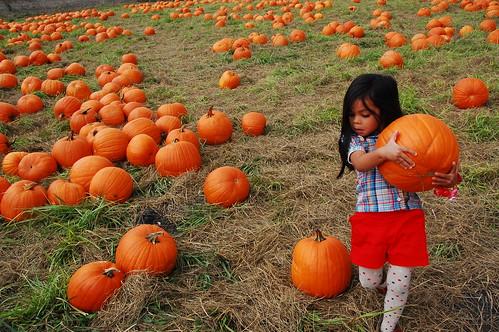pumpkin hunting