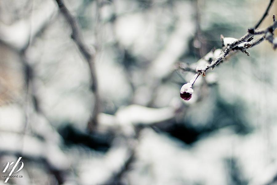 ~ 298/365 SNOW!!! ~