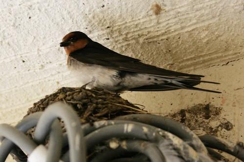 Day 303 - Nest
