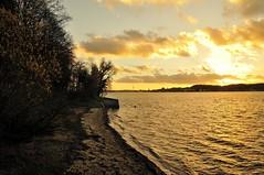 Wald am Meer #5 (liebeslakritze) Tags: autumn sunset forest germany deutschland sonnenuntergang sundown herbst balticsea wald ostsee kiel schleswigholstein hasselfelde mönkeberg
