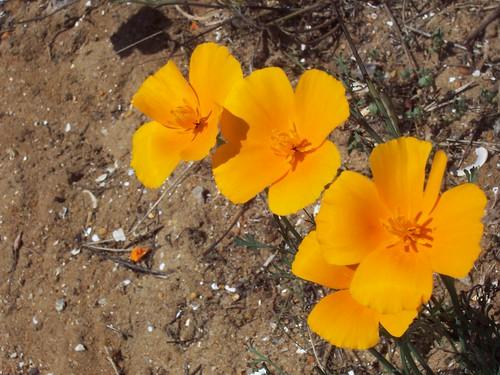 orange trio 1