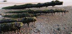 partridge island, nova scotia - by elh70