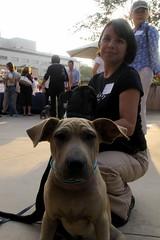 Gucamole the Dog (viewfromaloft/someonewalksinla) Tags: dogdayafternoon