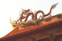 Dragon - by vishy-washy