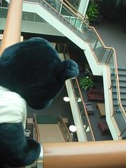 ナゾのクロクマ、キャンパスに行く。
